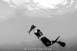 Isla Mujeres Sailfish run by Javier Sandoval 